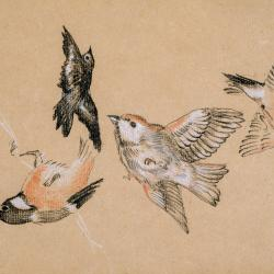 drawing of various types of birds on beige paper